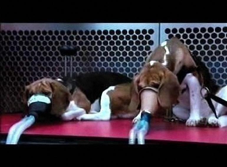 Cigarečių-testavimas-ant-gyvūnų-2.jpg