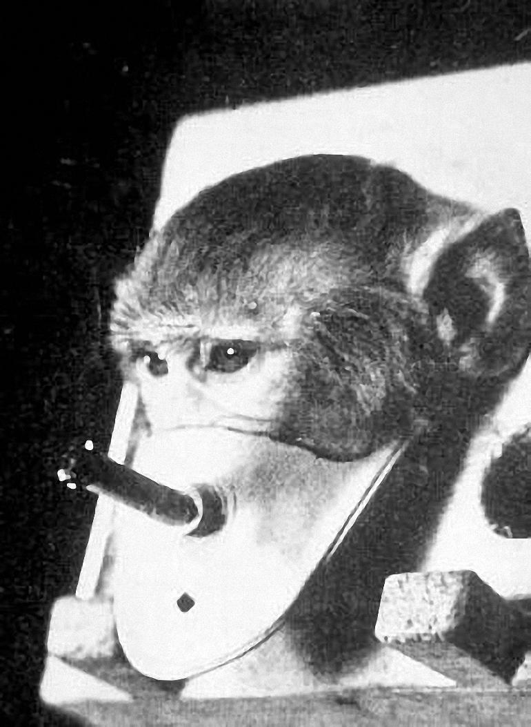 Cigarečių-testavimas-ant-gyvūnų-3.jpg