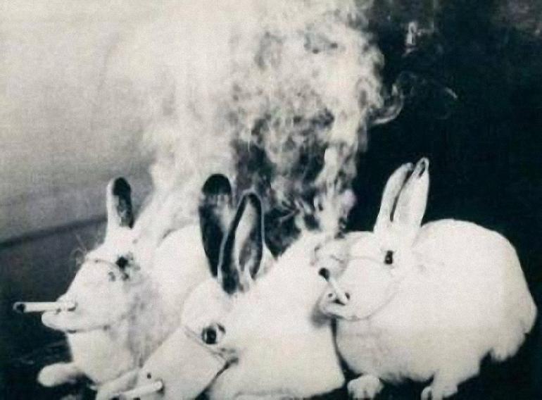 Cigarečių-testavimas-ant-gyvūnų-4.jpg