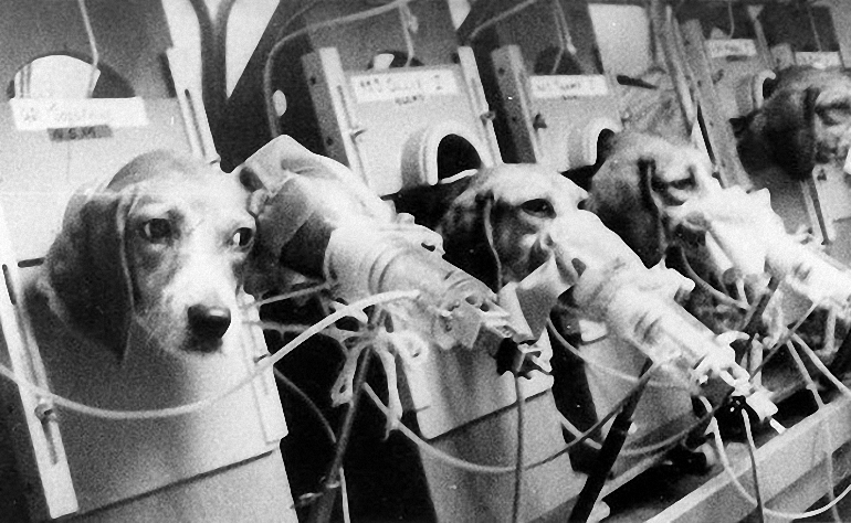 Cigarečių-testavimas-ant-gyvūnų-5.jpg