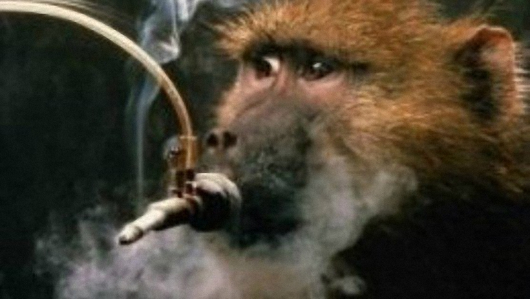 Cigarečių-testavimas-ant-gyvūnų-7.jpg