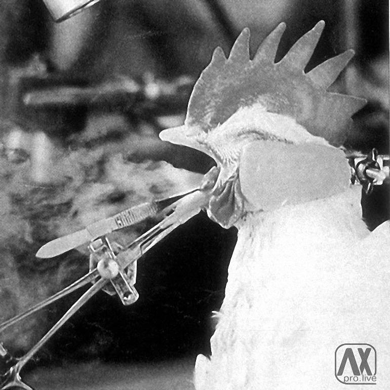 Cigarečių-testavimas-ant-gyvūnų-8.jpg